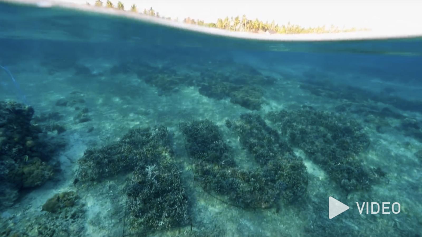 1UP zeigt die Entstehung des ersten 3D-Graffiti unter Wasser [Video]